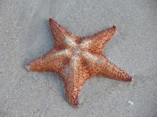starfish-on-beach.jpg