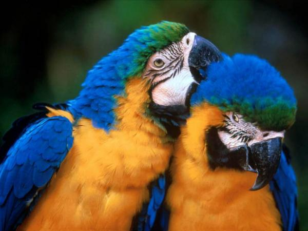 two-parrots.jpg