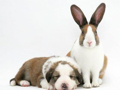 dog-rabbit.jpg
